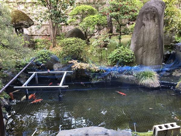 あづま荘中庭の池