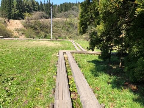 小杉の大杉までの遊歩道