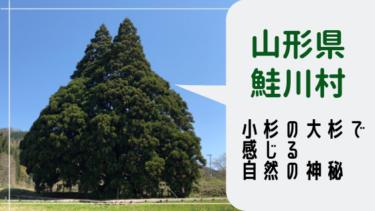 【鮭川村】小杉の大杉で感じる自然の神秘